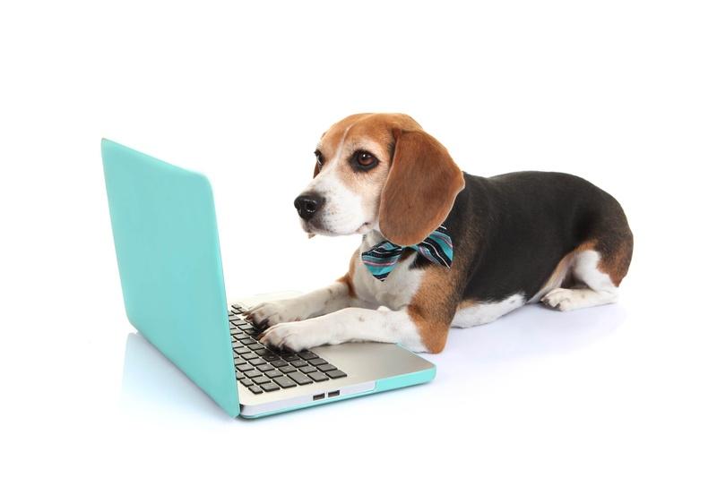 JR_Dog_laptop